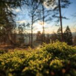 Lehtpuumetsade ilu ja valu