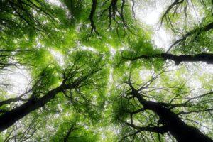 Metsaseadust tasub lugeda