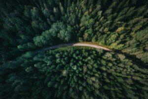 Mis on metsakasvatus?